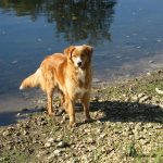 unsere-hunde3