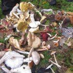 IMG_9694 Pilze Pilze Pilze
